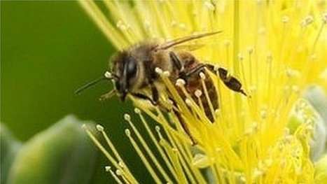 Bee rustling is 'growing problem' | Sustain Our Earth | Scoop.it