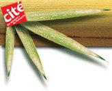 Bambou, herbe insolite - Présentation de l'exposition | TPE Bambou | Scoop.it