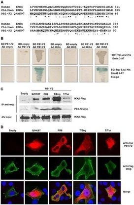 PLOS ONE: The Influenza Virus Protein PB1-F2 Interacts with IKKβ and Modulates NF-κB Signalling   Virology and Bioinformatics from Virology.ca   Scoop.it