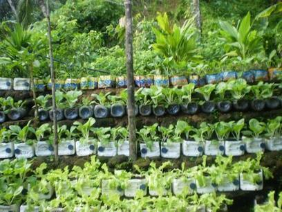 Phillipine Government Pushes Urban Farming to Help Attain Food Self-Sufficiency | Vertical Farm - Food Factory | Scoop.it