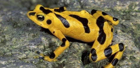 Vers une disparition mondiale des grenouilles ? | décroissance | Scoop.it
