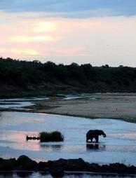 SanParks appoints interim CEO - Citizen   African Safaris   Scoop.it