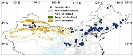 Scaling of nitrogen and phosphorus across plant organs in shrubland biomes across Northern China : Scientific Reports : Nature Publishing Group | Plant Gene Seeker -PGS | Scoop.it