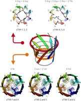 De novo design of a four-fold symmetric TIM-barrel protein with atomic-level accuracy | Computational approaches for protein engineering and design | Scoop.it
