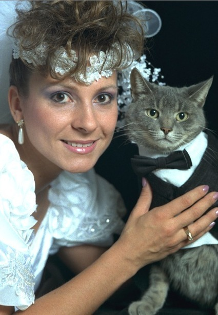 Just married | Funny and crazy cats | Scoop.it