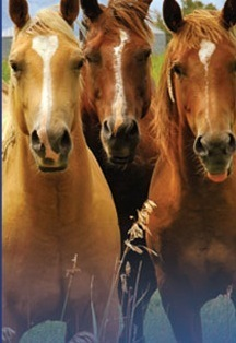 Best Horse Stem Cell Nutrition Supplement, Releases Millions More Stem Cells into Horses Bloodstream | Pets In Pain: Need Stem Cell Nutrition! | Scoop.it