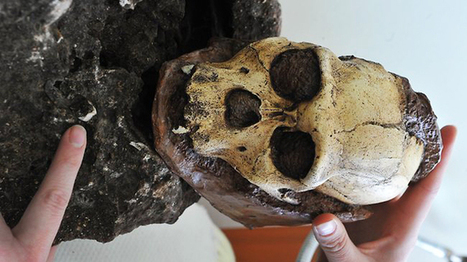 1.9-million year old fossil of human ancestor found in South African lab   Archaeology and the Bronze Age   Scoop.it