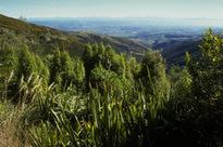 The Port Hills - Travis Wetland Nature Heritage Park - Christchurch City Council | Walking Christchurch | Scoop.it