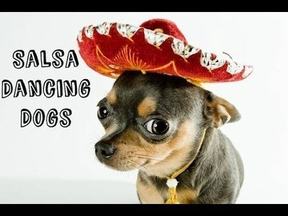 Salsa Dancing Dogs | Videos That Make You Happy, Sad and Feel Good | Scoop.it