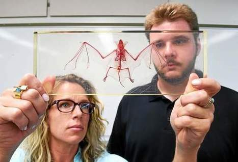 SCSU science team working to save Connecticut's bats from extinction - New Haven Register | Bat Biology and Ecology | Scoop.it