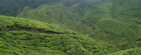 3 Days Package - Munnar & Cochin - | Kerala Tourism | Scoop.it