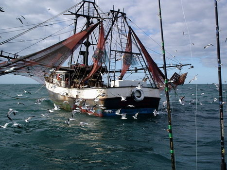 Gulf of Mexico shrimpers dismiss offer from oil spill   Texas Coast Living   Scoop.it