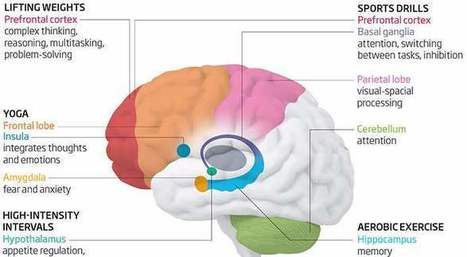 New Finding: Different Types of Exercise Affect Different Parts of Your Brain | Physical Education | Scoop.it