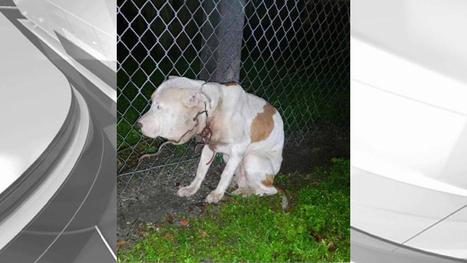 Dog Left Tied to Fence Suffers Gruesome Injury | Business News & Finance | Scoop.it