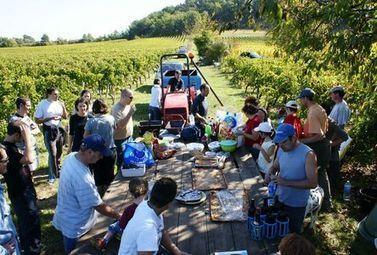 Vendanges 2013 : votre Job d'été ! - Magazine du vin - Mon Vigneron   Agenda du vin   Scoop.it