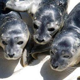 Robot seal: Alternative animal therapy in a Hong Kong nursing home - Haaretz | Geriatrics | Scoop.it