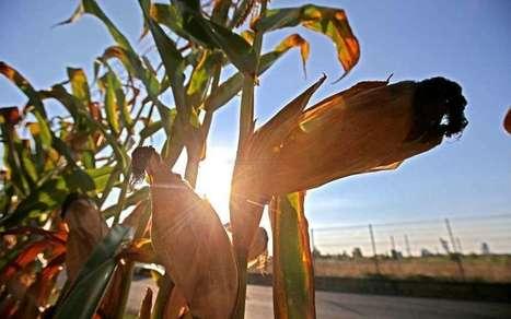 Un été trop sec en Béarn : même la pluie n'y pourra rien | Agriculture en Pyrénées-Atlantiques | Scoop.it