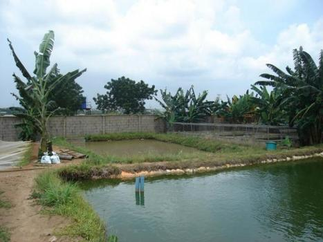 Want To Start A Fish Farming Business In Nigeria? | Fish Farming Business.com | Aquaculture | Scoop.it