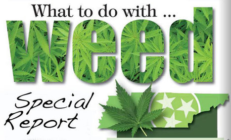 Special Report: What to do with weed? | Cannabis News | Scoop.it