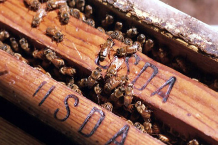 City bees pollinate urban education | Miscellaneous | Scoop.it