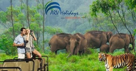 Take the enjoyment of your honeymoon while exploring the amazing wildlife in Kerala | Kerala Backwater India | Scoop.it