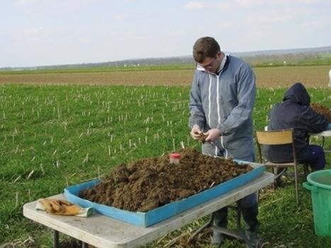 INRA - Réduire l'usage des pesticides pour augmenter les populations de vers de terre dans les sols agricoles | L'œil de Dijon Céréales | Scoop.it
