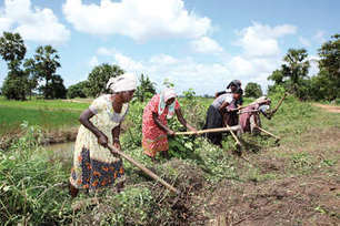 Women's access to ICTs / ICT4Ag: Q&A / Regulars / Home - ICT Update, a current awareness bulletin for ACP agriculture | Youth agriculture and ICT | Scoop.it