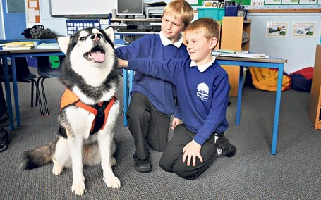 Dogs in the classroom: teaching children about kindness and empathy | Animals R Us | Scoop.it