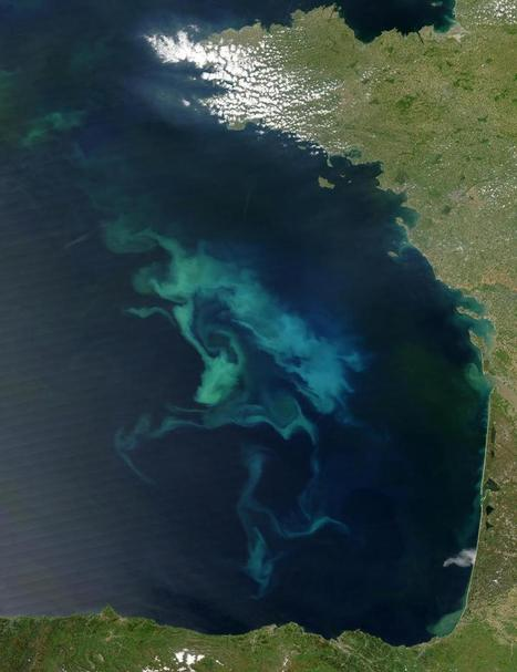 Phytoplankton and zooplankton biomass will decrease 6 and 11 percent due to climate change | Sustain Our Earth | Scoop.it