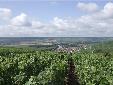 Dom Perignon, Bollinger, Pol Roger, Cristal...In focus: 2002 #Champagne | Le Vin en Grand - Vivez en Grand ! www.vinengrand.com | Scoop.it
