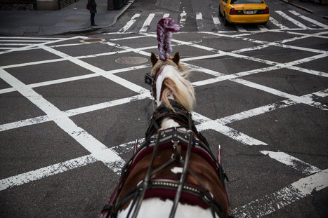 Who Speaks for the Carriage Horses? | The wonderful world of horses | Scoop.it