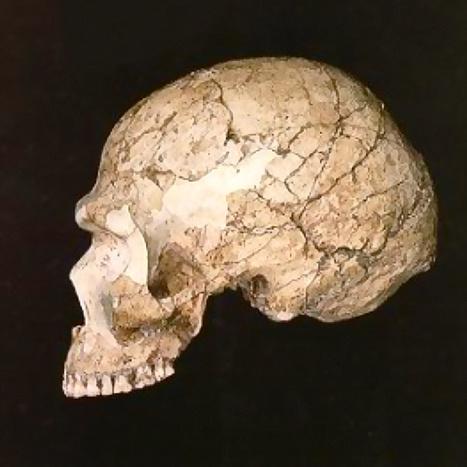 Génétique: trois plongées dans la préhistoire | Agence Science-Presse | Intervalles | Scoop.it
