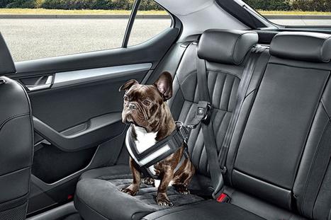 Skoda lance une ceinture de sécurité pour chien | CaniCatNews-actualité | Scoop.it