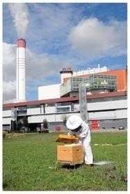 Biocenys : quand l'entreprise participe à la survie de l'abeille - Scoop.it | carbon sequestration | Scoop.it