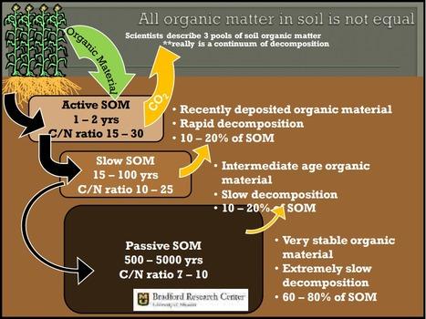 Toutes les matières organiques dans le sol ne sont pas les mêmes : 3 pools à durée différente | MOF Matière Organique Fugace réactive du sol | Scoop.it