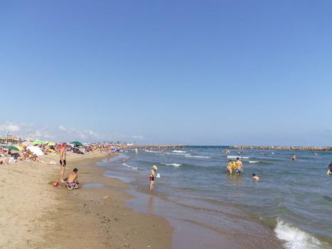 Météo des plages & méduses   méduses   Scoop.it