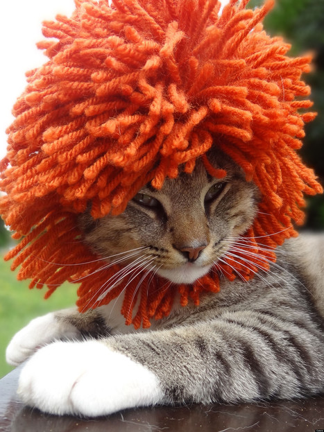LOOK: Cats In Hats Will Make Your Friday | Pets | Scoop.it
