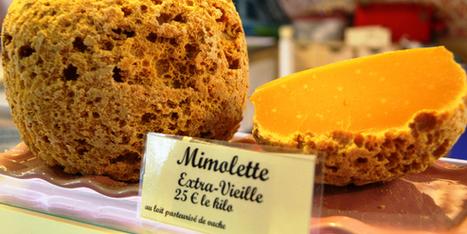 Etats-Unis: la France perd la guerre de la mimolette vieille | The Voice of Cheese | Scoop.it