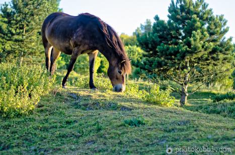 La Fontaine photopoésie le renard, le loup et le cheval... | photopoesie | Scoop.it