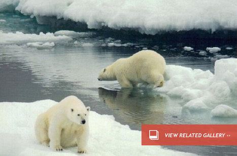 For Polar Bears, Some Places Better Than Others : DNews | Sustain Our Earth | Scoop.it