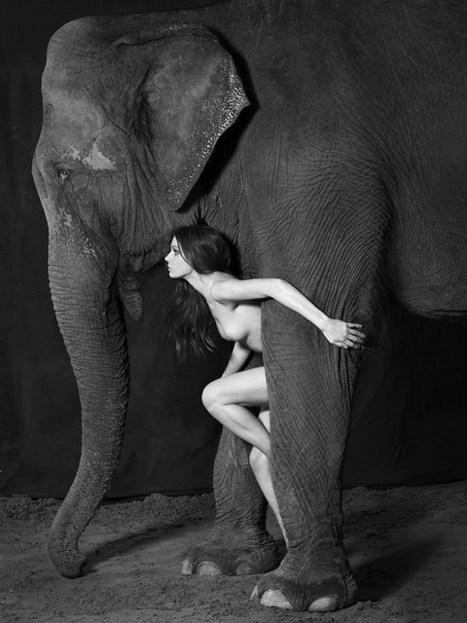 Vanessa von Zitzewitz. Dancing with Elephants | Écrire la lumière, coucher la couleur, élever la forme. | Scoop.it
