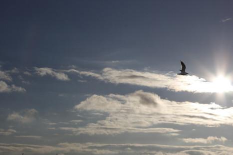 It's a Bird, It's a Plane. No..It's a Paravelo Flying Bicycle? | Geek Speak | Scoop.it