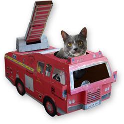 Un chat sauve la maison d'un incendie en ouvrant la fenêtre ! | Mais n'importe quoi ! | Scoop.it