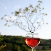 Un vin Bio, 100 % Bio ! | Vin Bio et naturel | Scoop.it