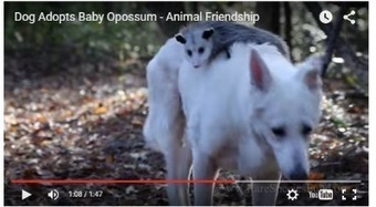 Weekly Heart Opener: Dog and Opossum Are Best Friends For Life | Eileen Anglin | Compassion in Action | Scoop.it