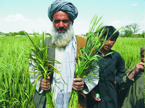 Balochistan Govt for development of agriculture sector - Business Recorder (blog) | Floriculture in India | Scoop.it