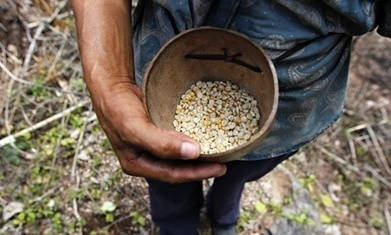 Why are there still so many hungry people in the world? | Questions de développement ... | Scoop.it