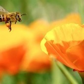 Pesticide Companies Sue EU Commission for Protecting Pollinators | Food issues | Scoop.it