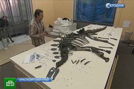 Oldest stegosaurus skeleton tobeshown inKrasnoyarsk | Ancient Archeology | Scoop.it