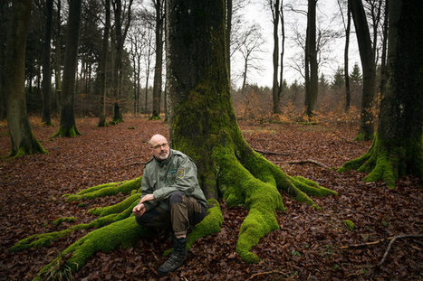 German Forest Ranger Finds That Trees Have Social Networks, Too | Outdoor Fitness | Scoop.it